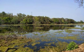 Wetlands with lush greenery on the banks