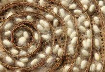 Types of Silk depends on Silkworm