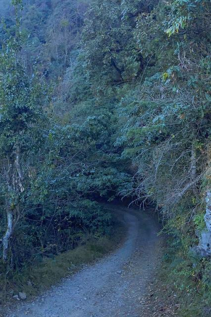 The Safari Route of Kaudia Forest at Kanatal