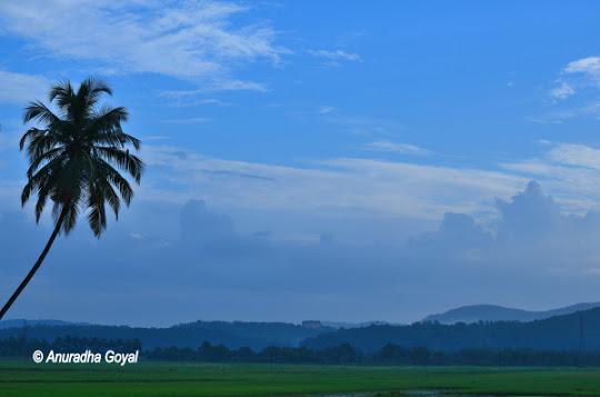 Maina landscape
